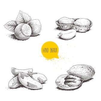Бразильские орехи и пекан Premium векторы