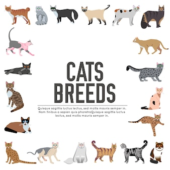 Breed cats icons set. cute animal pet . collection different kitten layout
