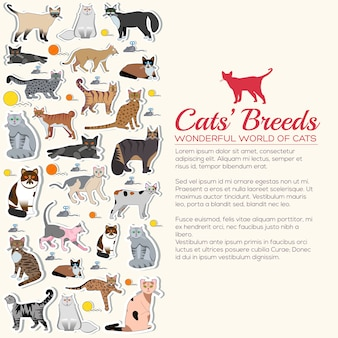 Breed cats icons sticker set. collection different kitten layout  sticker