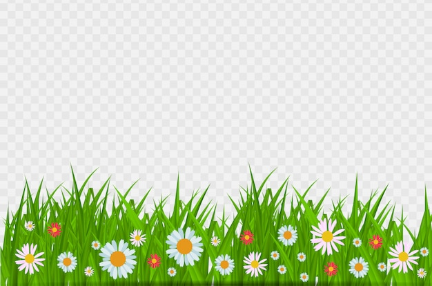 Brighgrass and flowers border, greeting card decoration element for easter on transparent