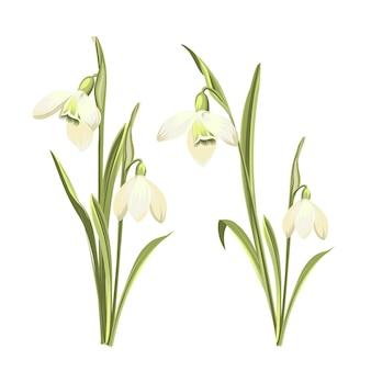 咲くガランタスの明るい花束