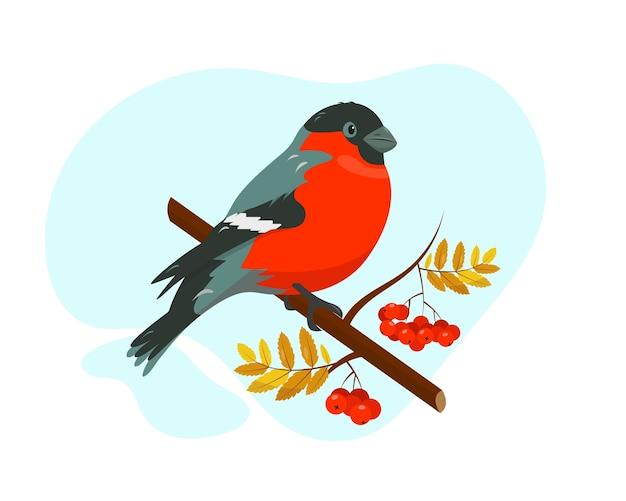 Bright bullfinch on the branch with rowan beries on blue and white background.