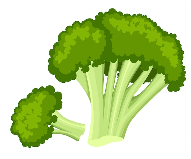 Bright  collection of colorful broccoli. fresh cartoon different vegetable  on white background used for magazine book poster card menu cover pages. web site page and mobile app .