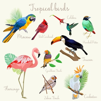 Bright color exotic tropical birds set isolated