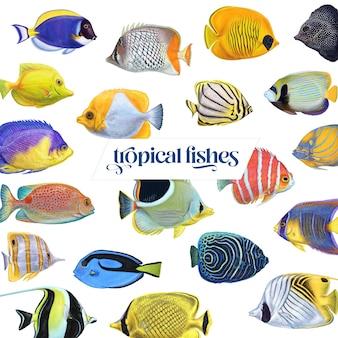 Bright colorful tropical exotic asian underwater aquarium fish