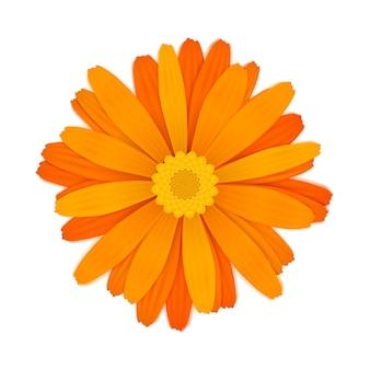 白地に明るいカラフルなオレンジ色のガーベラの花