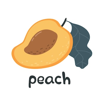 Bright creative peach with the word peach vector illustration with lettering