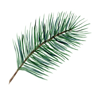 新年のグリーティングカードとバナーの装飾のための明るい緑の水彩針葉樹の枝のイラスト