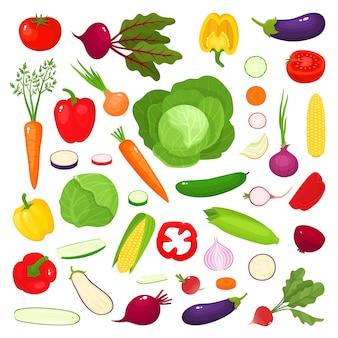Bright illustration of colorful vegetables, fresh cartoon organic vegetables  on white