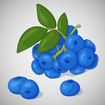 Bright juicy blueberry on grey background in cartoon style.