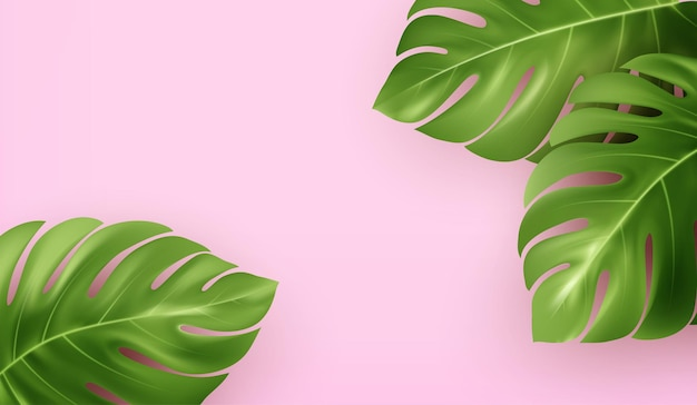 Bright pink summer background with tropical realistic monstera leaves.