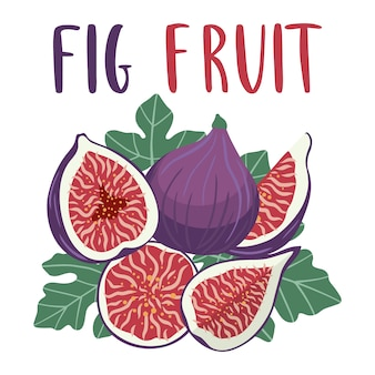 Bright set of colorful fig fruit.