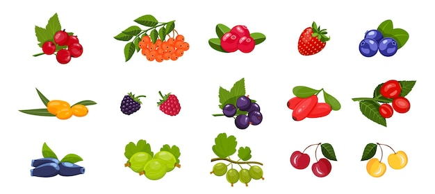 Bright set of different drawn berries with leaves on a white background