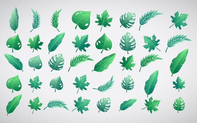Bright set illustration of tropical leaves