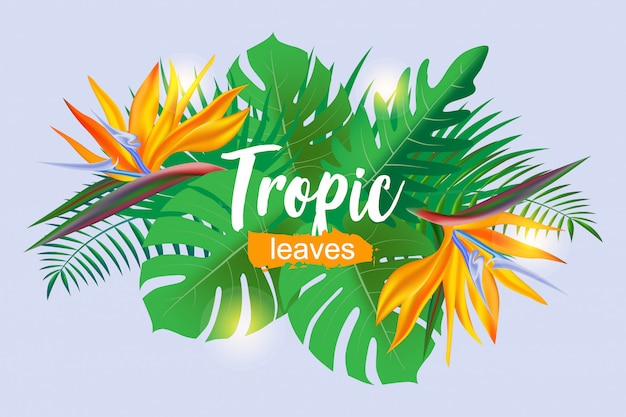 Bright tropical background with jungle plants