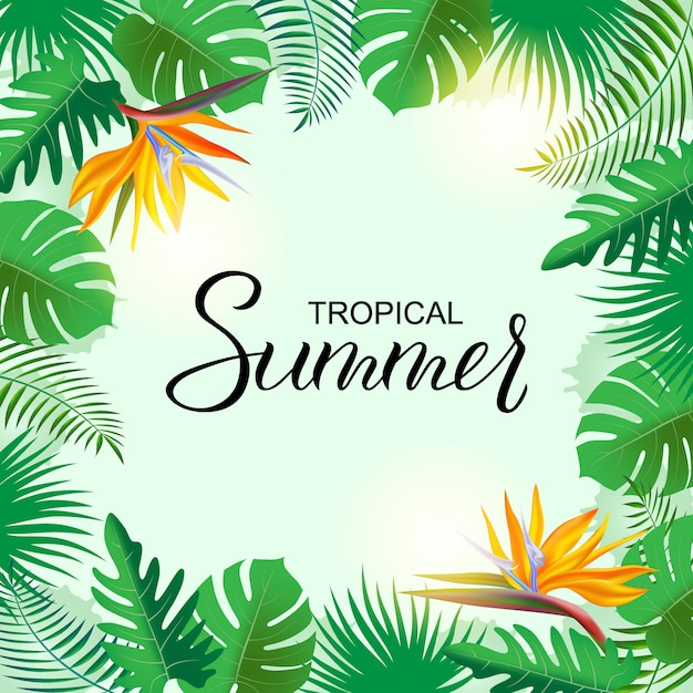 Bright tropical background