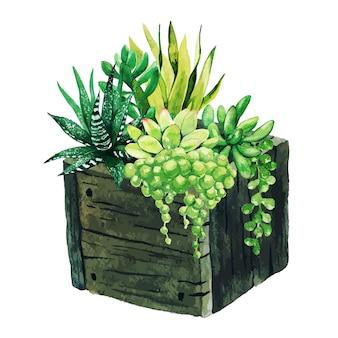 나무 상자에 밝은 수채화 다육 식물, 손으로 그린