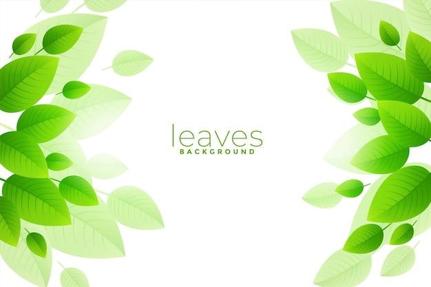 Brish green leaves background design