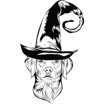 Бриттани-спаниель в шляпе ведьмы на хэллоуин