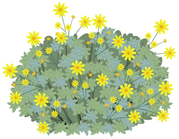 Brittlebush in cartoon style isolated on whit
