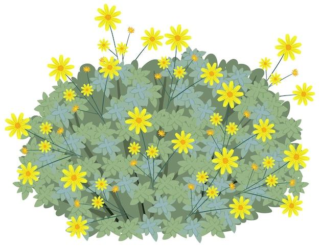 오순절에 고립 된 만화 스타일의 brittlebush