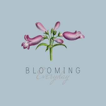 Broadleaf penstemon flower