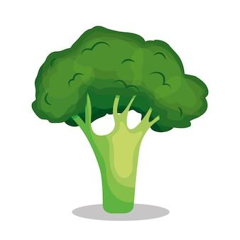 Рисунок брокколи