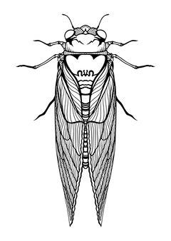 Выводок x цикад насекомое 2021 графическая иллюстрация