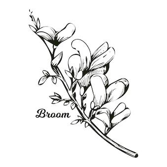 빗자루 꽃, 녹색 녹지, 잡초 및 휘핑, 퍼즈, 녹색 빗자루, 녹초, 피 꽃의 나무 왁스. genista tinctoria, lupine lupine gorse 및 laburnum 흑백.