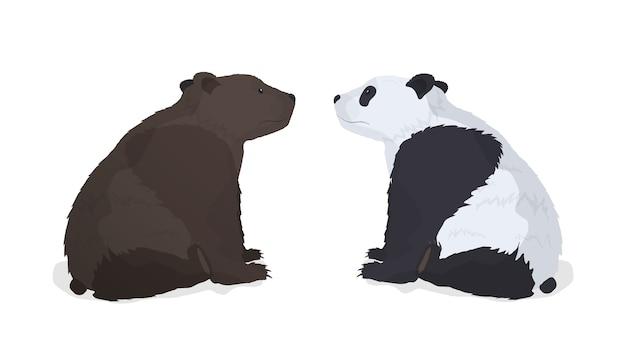 Бурый медведь и панда изолированы