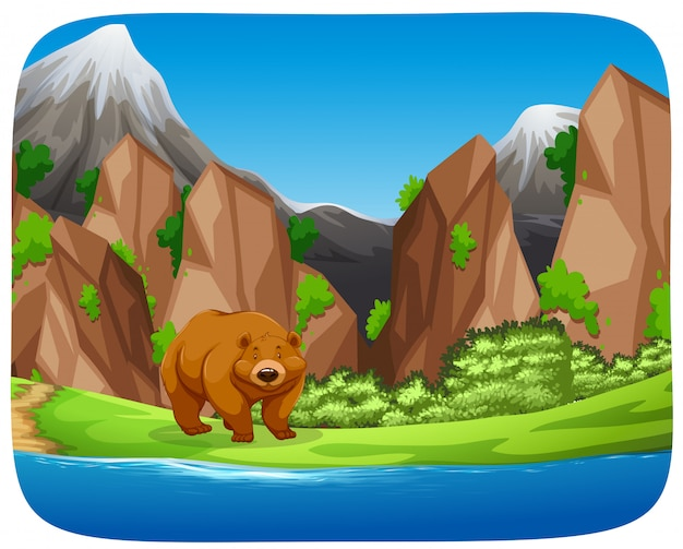 Brown bear in moutain scene