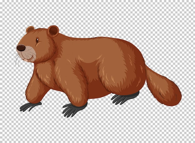 Brown beaver on transparent background