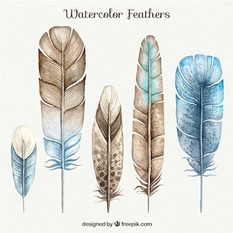 Brown and blue watercolor feathers set