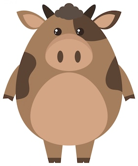 Brown cow on white background