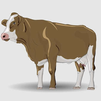 Brown cow with white stripes illustration and vector