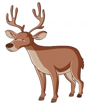 白い背景の上の茶色の鹿