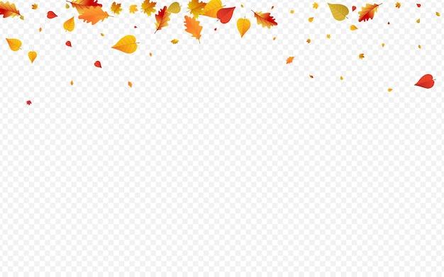 茶色の葉ベクトル透明な背景。ダウンフローラルカード。黄金の装飾植物のデザイン。 11月のイラスト。