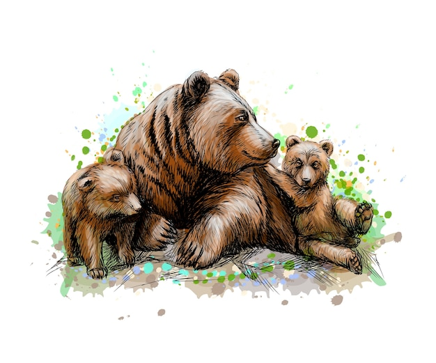 Brown mother bear with her cubs from a splash of watercolor, hand drawn sketch.  illustration of paints