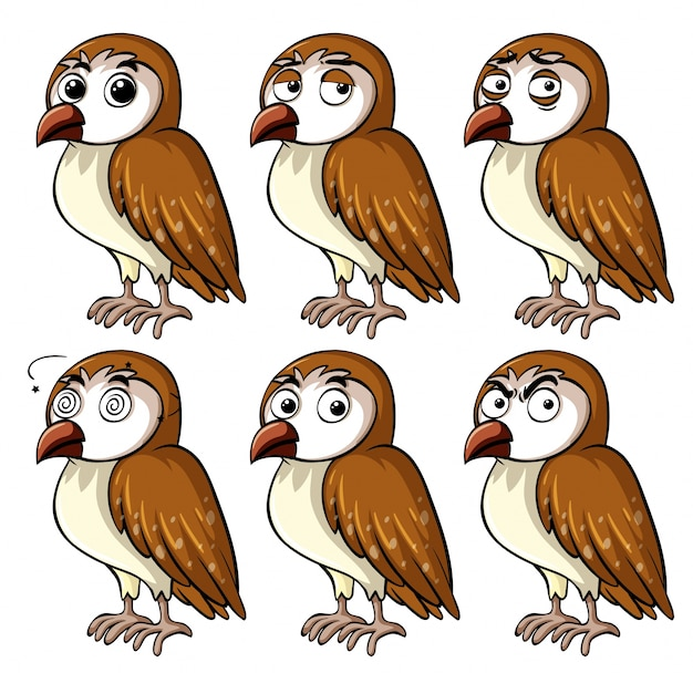 Brown owl with different facial expressions