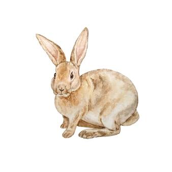 Brown rabbit illustration