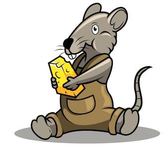 Brown rat eating cheese.