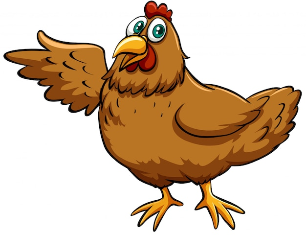 Brown spring chicken