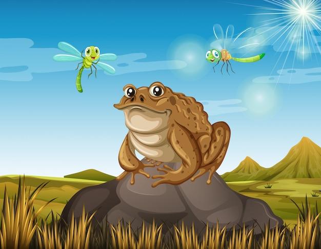 Коричневая жаба сидит на скале