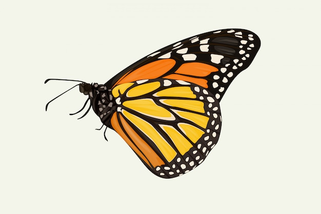 Коричневая крылатая бабочка рука рисунок