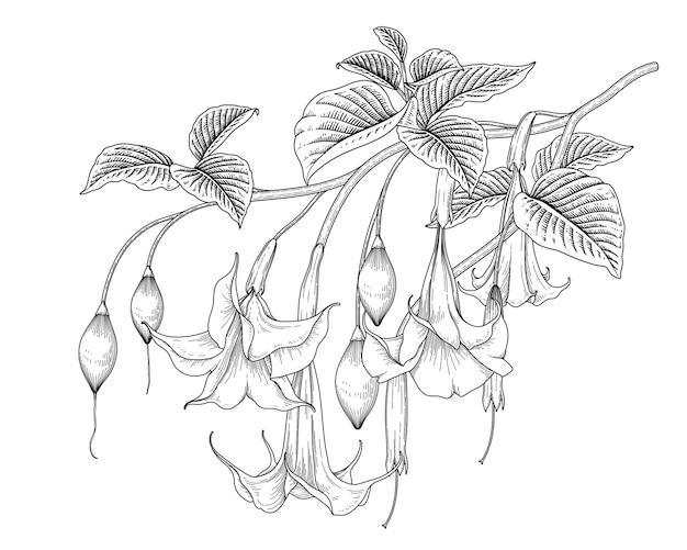 Brugmansia 꽃 흰색 절연