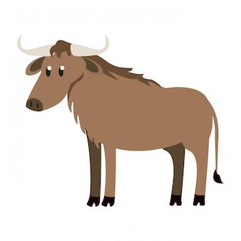 Buffalo wild animal