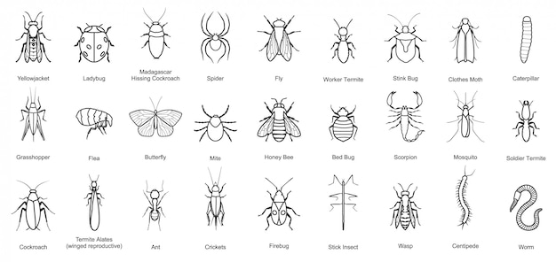 Bug of insect  line set icon. illustration insect beetle. isolated line icon bug and fly beetle.
