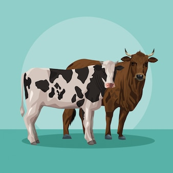 Bull and cow animals farm