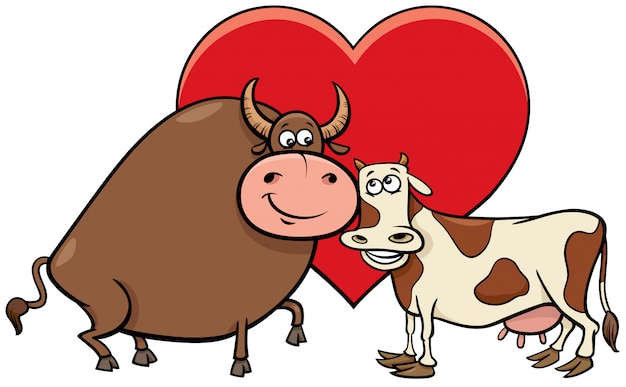 Bull and cow in love
