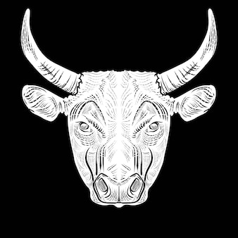 Bull head draw engraving